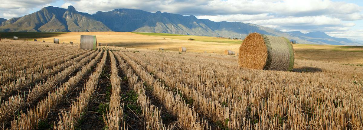 Agri Novatex, South Africa, Fields, Bale Net Wraps, Bale Nets