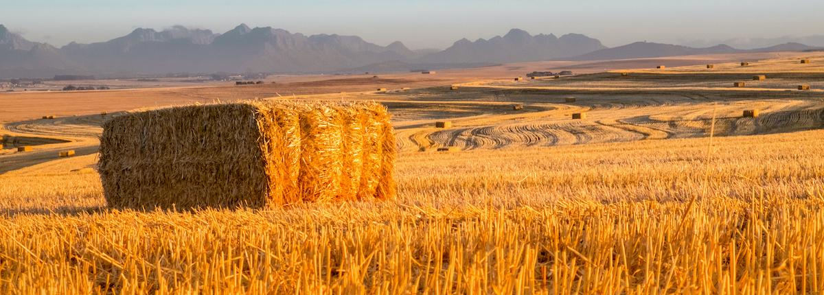 Agri Novatex, South Africa, Fields, Bale Twine